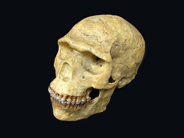 Neanderthal  Wikipedia
