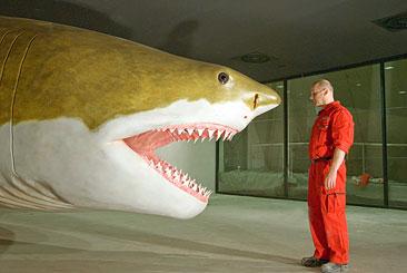 Wie Groß Ist Der Größte Hai Der Welt